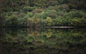 Picture trees, lake, reflection, mirror, riverside, lakeshore, riverscape