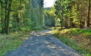 Picture road, forest, summer