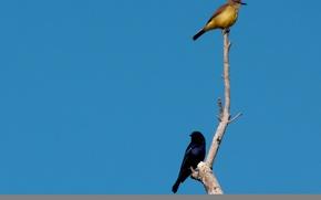 Picture Birds, Branch, Blue, Couple, Bluebird, Brown