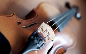 Picture macro, photo, Wallpaper, violin, strings, case, tool, picture, wallpapers, music