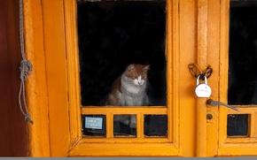Wallpaper cat, the door, castle