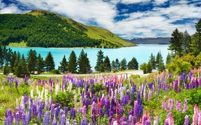 Picture forest, the sky, clouds, trees, landscape, mountains, lake, blue, mountains, lavender, Lavander