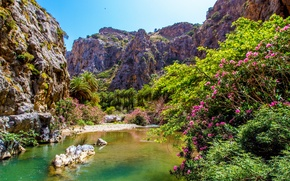 Picture the sky, trees, flowers, mountains, lake, Palma, rocks, stone