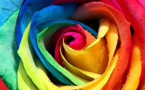 Picture Rosa, rose, petals, Bud, colorful, rainbow