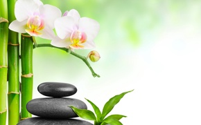 Picture bamboo, Orchid, leaves, Spa stones