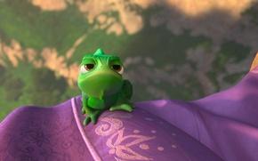 Picture chameleon, Rapunzel, Pascal