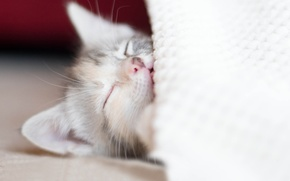 Picture kitty, stay, sleep, baby