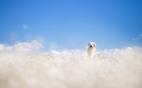 Picture field, summer, dog