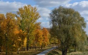Picture autumn, trees, foliage, color