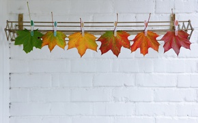 Wallpaper leaves, autumn, clothespins