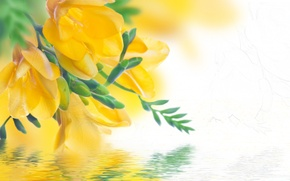 Picture yellow, petals, reflection, water, flowering, Freesia, buds