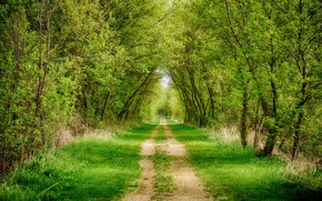 Picture road, forest, grass, trees, alley, path