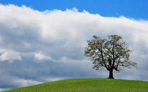 Picture the sky, grass, clouds, tree, hill