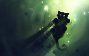 Wallpaper cat, water, apofiss, black