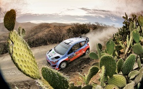 Picture Dust, Hyundai, Mexico, WRC, Rally, Cactus, i20, Neuville