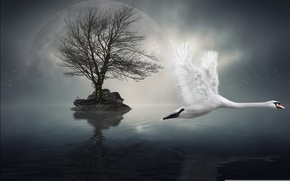 Picture style, background, Swan