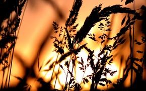 Wallpaper the sun, grass, Sunset