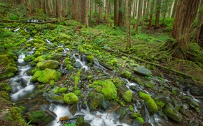 Picture forest, trees, stream, stones, moss, Olympic National Park