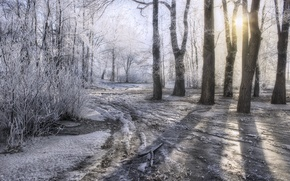 Picture ice, winter, frost, road, the sun, snow, trees, HDR, frost, winter, snow, sun, frost