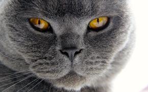 Picture cat, mustache, face, macro, fur