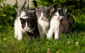 Picture grass, kittens, kittens, weed