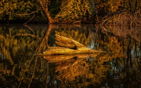 Picture autumn, forest, trees, lake, pond, reflection, snag