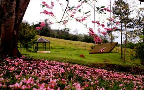 Picture forest, grass, trees, flowers, nature, Park, spring, grass, forest, trees, nature, park, flowers, spring, walk