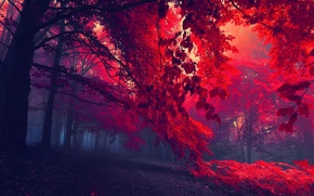 Picture autumn, leaves, trees, red