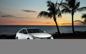 Picture Toyota, camry, tropical, xle