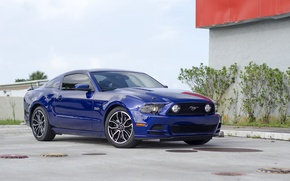 Picture Mustang, blue, 5.0, 2013