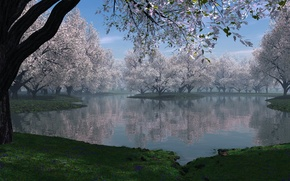 Picture grass, trees, flowers, nature, lake, spring, haze, blooming