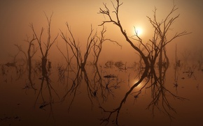 Picture the sun, trees, nature, fog, lake, photo, the evening