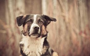 Wallpaper look, each, dog, blur