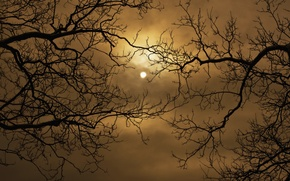 Picture the sky, clouds, night, the moon, silhouette, Moon, sky, branch. trees