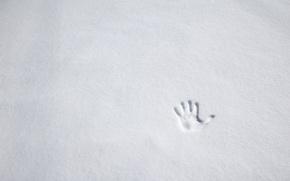 Picture winter, snow, palm, imprint