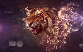 Picture tiger, look, Desktopography, splinters, blast