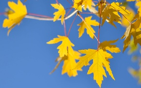 Picture autumn, the sky, leaves, branch