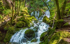Picture forest, trees, stream, stones, moss, stream
