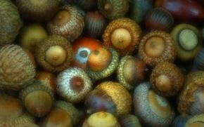 Picture nature, walnut, the fruit, acorn