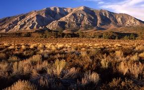 Picture plain, CA, hill, shrub