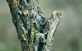 Picture tree, bark, dry, dead wood