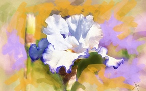 Picture flower, figure, graphics, picture, painting, gently, iris, pastel colors, Wallpaper from lolita777