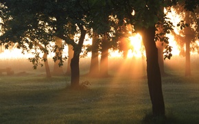 Picture greens, forest, summer, grass, the sun, rays, light, trees, nature, dawn, morning, garden