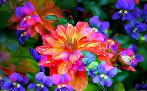 Picture flower, line, drop, petals, garden