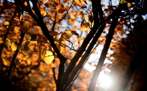 Wallpaper widescreen, blur, leaves, HD wallpapers, Wallpaper, leaves, tree, orange, full screen, the sun, background, branches, ...