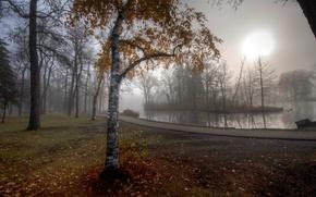 Picture autumn, leaves, fog, pond, Park, tree, track