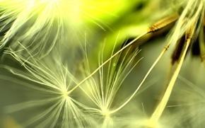 Picture macro, Dandelion, seeds