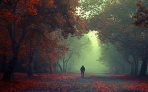 Picture forest, leaves, trees, fog, the way, male, forest, trees, leaves, fog, way, man, walking, walking
