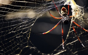 Picture WEB, INSECT, LEGS, SPIDER