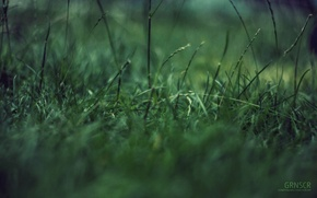 Picture grass, macro, green garbage, concentration